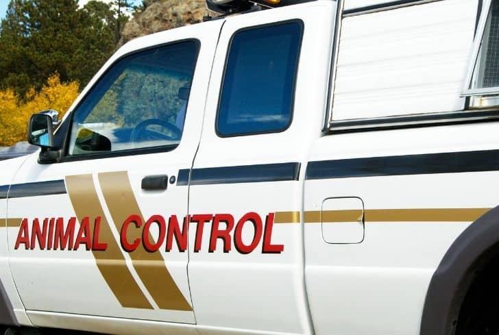 animal-control-service