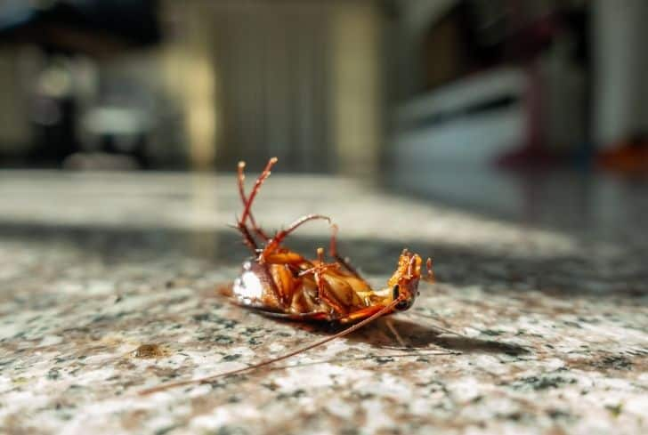 dead-cockroach-on-floor